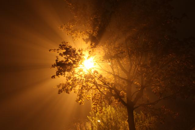 Image for Streetlight in deep fog