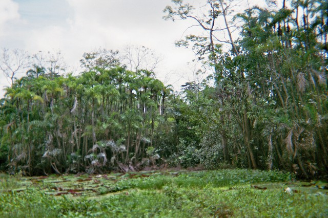 Image for Djungle near Iquitos
